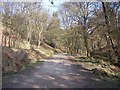 SJ9581 : Hase Bank Wood at Lyme Park by Raymond Knapman