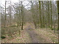 SD4896 : Path through the woodland at Rather Heath by John Slater