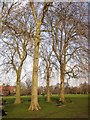 TQ2278 : Trees, Ravenscourt Park by Derek Harper
