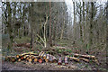 SP0513 : Woodland Management by Footpath to the Roman Villa, Chedworth by Christine Matthews
