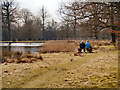 SJ7387 : Dunham Massey, The Island Pool by David Dixon