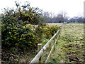 SU0804 : Field Fencing on West Moors. by Nigel Mykura