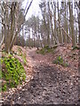 TM1240 : Track in Old Hall Woods by Chris Holifield