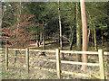 SU7685 : Benhams Wood - a mixture of species by Stuart Logan