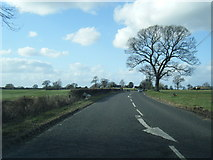 SJ8566 : A34 north of Sandhole Farm by Colin Pyle