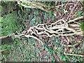 ST5760 : Vegetation on Denny Island by ErrolEdwards
