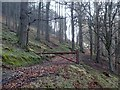 SK1987 : Forest track by Ladybower Reservoir by Andrew Hill