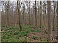 TL7831 : Looking from Pod's Lane, Broaks Wood by Roger Jones