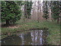 TL7931 : Mixed woodland near pond in Broaks Wood by Roger Jones