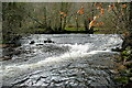 SX8079 : Weir on the River Bovey by Graham Horn
