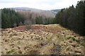 NN3625 : A clearing in forestry plantations near Crianlarich by Dorothy Carse