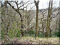 SJ9494 : Haughton Dale by Gerald England
