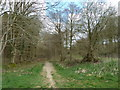 SU8212 : 40: From Stoughton to East Marden (and back) by Basher Eyre