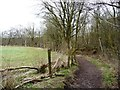 SJ8148 : Footpath along the northern edge of Watermills Wood by Christine Johnstone