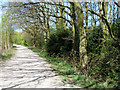 TQ6191 : Path to Thorndon Country Park (north) by Robin Webster