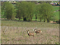 TL9327 : Deer in the field, Fordham by Roger Jones