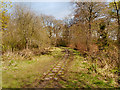 SD6008 : Miniature Railway, Haigh Upper Plantation by David Dixon
