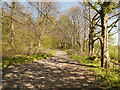 SD5907 : Haigh Country Park by David Dixon