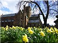NY3955 : Daffodils, Carlisle by Kenneth  Allen