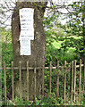 TG3507 : Notices on tree beside Wood Lane by Evelyn Simak