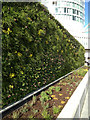SP0786 : Planted screen wall and raised bed, Worcester Walk by Robin Stott