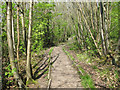 TM0322 : Path in Wivenhoe Wood by Roger Jones