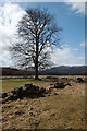NH5192 : Tree with ruined walls by Trevor Littlewood