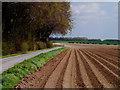SE9166 : Potato Field next to Kirby Plantation : Week 19