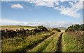 NU0133 : Track NE of Doddington by Kim Fyson