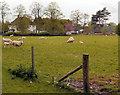 SJ8475 : Bentley House Farm by David Dixon