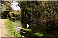 SP8610 : The Wendover Arm Canal in Halton by Steve Daniels