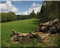 TQ3870 : Fallen tree, Beckenham Place Park by Derek Harper