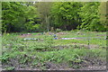 SK3192 : Allotment and Bee Hives, Langsett Road South, Oughtibridge, Sheffield - 1 by Terry Robinson