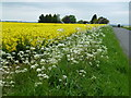 TL2580 : Farmland near Grange Farm, Great Raveley by Richard Humphrey