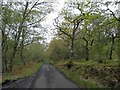 NM9342 : Single track road with passing places through Rubha Garbh wood by Steve  Fareham