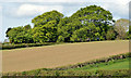J5065 : Trees, Ringneill near Comber by Albert Bridge