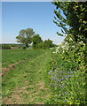 TL6342 : Castle Camps: footpath and spring flowers by John Sutton