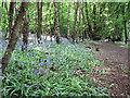 TL2418 : Path along North Edge of Mardley Heath by Chris Reynolds