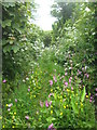 SW5933 : A little-used footpath at Paul's Green by Rod Allday