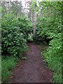 TL1640 : Woodland path by Philip Jeffrey