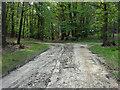 SU8864 : Path junction, Swinley Forest by Alan Hunt
