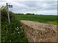TL5585 : Footpath from Grange Lane, Littleport by Richard Humphrey