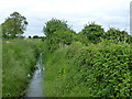 TL5586 : Ditch at the end of  Wood Fen Road, Littleport by Richard Humphrey