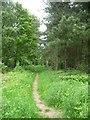 SK6155 : Footpath into Haywood Oaks by Christine Johnstone