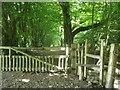 TQ5134 : High Weald Landscape Trail enters Badbrook Wood by David Anstiss