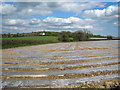 SX3380 : Plastic covered field at Trewarlett by Rod Allday