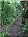 TL0440 : Path into King's Wood by Philip Jeffrey