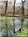 SP9713 : Reflections in Clickmere Pond (March 2010) by Chris Reynolds