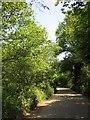 SX4162 : Lane in Kingsmill Lake valley by Derek Harper