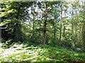 TQ3930 : Birchgrove Wood by Paul Gillett